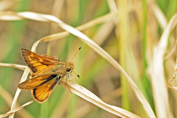 Yellow and black butterfly resting
