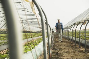 Bauer blickt auf Pflanzen im Gewächshaus