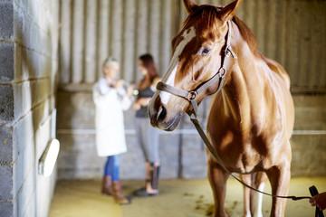 Pferd im Stall mit Teenager-Mädchen und Tierarzt im Hintergrund