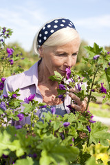Deutschland, Sachsen, Ältere Frau, Riecht an Blume