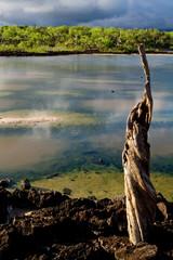 Beautiful colorful landscape around lagoon, Galapagos Islands