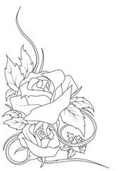 disegno rose
