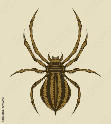 Illustration of spider.