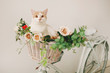 Cat with flowers in wicker basket of white retro bisycle