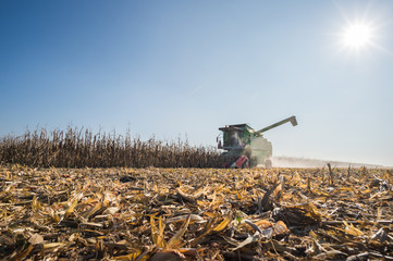 Harvesting of corn