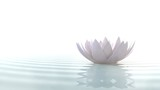 Zen lotus on water