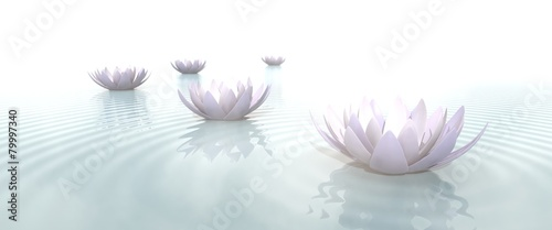Leinwanddruck Bild Zen Flowers on water in widescreen