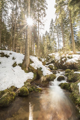 brook in black forest, Germany