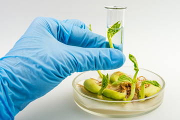 Close up of scientist hand holding tube with leaf on laboratory
