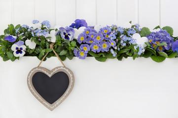 Hintergrund weiß: Frühlingsblumen auf Holz in blau