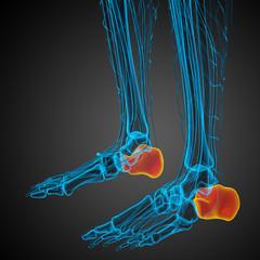 3d render medical illustration of the calcaneus bone