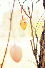 easter eggs outdoor hanging on a bush - greeting card