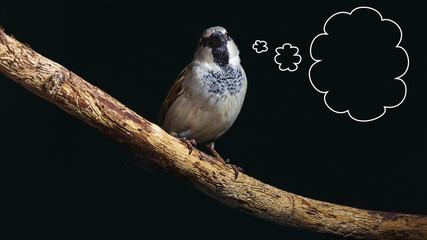 Sparrow thinking