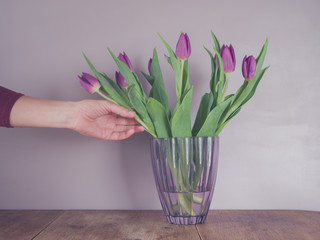 Hand touching purple tulips in vase