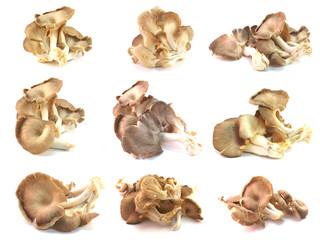 set of mushroom isolated on a background