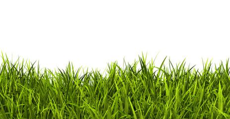 Gras, Rasen, Wiese, Ostergras, Panorama, Banner, Hintergrund, 3D