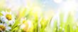 art abstract sunny  springr flower background - 80015720