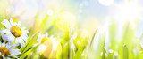 Fototapety art abstract sunny  springr flower background