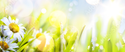 art abstract sunny  springr flower background