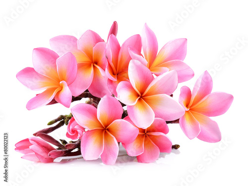 Foto op Plexiglas Frangipani Pink Plumeria flowers isolated on white background