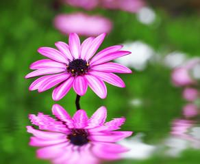 flores de colores en el agua