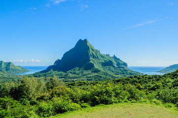 Green tropical Moorea