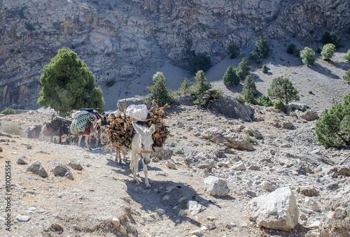 Poster Ezel Donkey caravan in mountains of Tajikistan