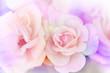 Pink rose background,Flower blur background