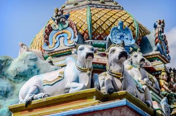 Cows. Detail  of indian Kapaleeswarar temple