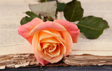 Tea rose with open old book on color wooden table, closeup