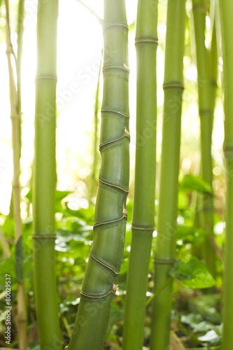 Papiers peints Bambou Bambusstamm mit unregelmäßige Rhizome