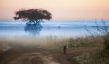 hyena before dawn with fog