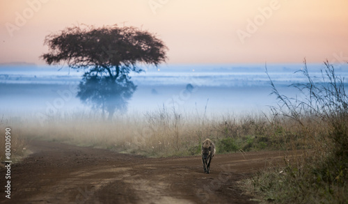 Fotobehang Hyena hyena before dawn with fog