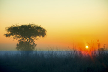 sunrise over african plains