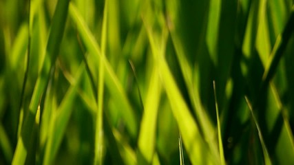 grass moving in the wind