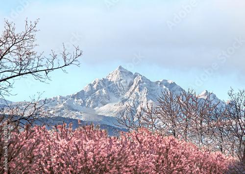Leinwandbild Motiv Schneebedeckter Berg im Frühling