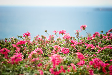 flowers and sea background