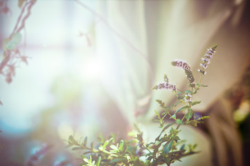 Light soft floral background