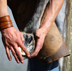 blacksmith hands and horse leg