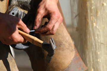 farrier working close up