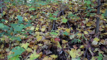 forest walk in autumn