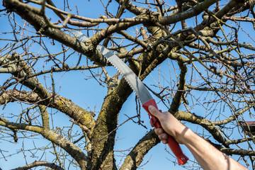 Baumpflege Baumsäge Astsäge01
