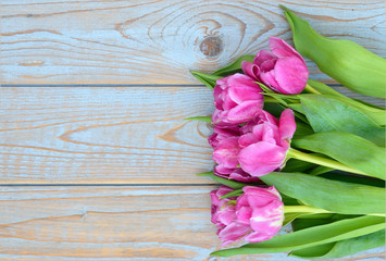 Row of pink tulips on old wood with empty space