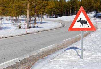 Beaware of moose