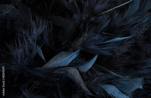 Tuinposter Stof black feather