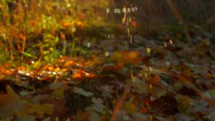 Spider Web In Autumn Forest