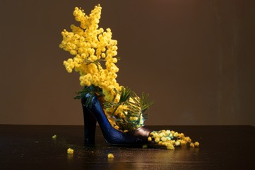Mimose nella scarpa