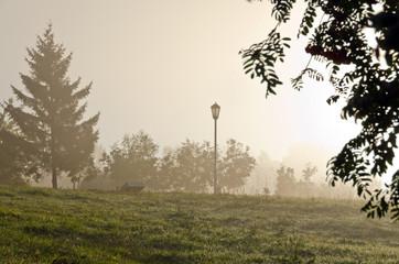 Fog above green grass