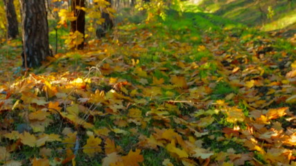 Early Autumn In Deciduous Tree Forest