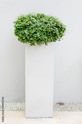 Plexiglas Bonsai plant in flowerpot